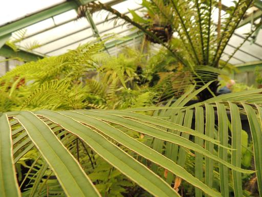1 nov visite les serres du jardin botanique li ge for Amis du jardin botanique
